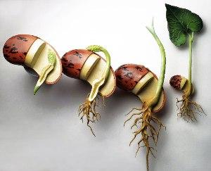 growing-seed2