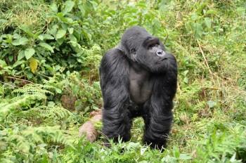 800lb Gorilla Enters Debt Collection Software Space